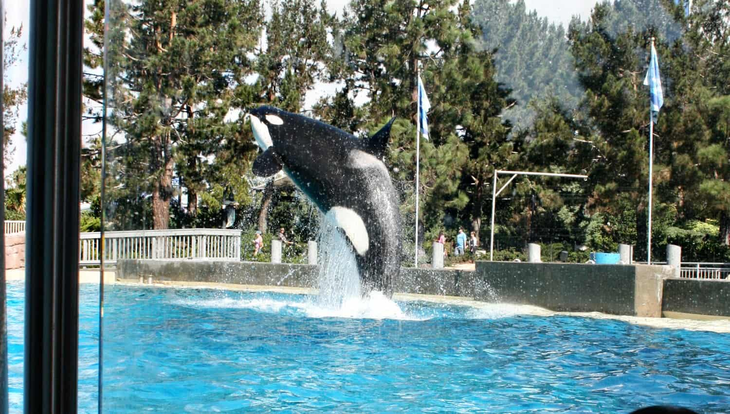 SeaWorld San Diego Dine with Orcas
