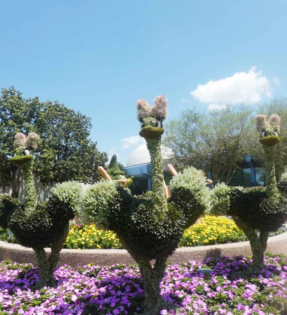 Fantasia ballerina ostriches at Epcot flower and garden