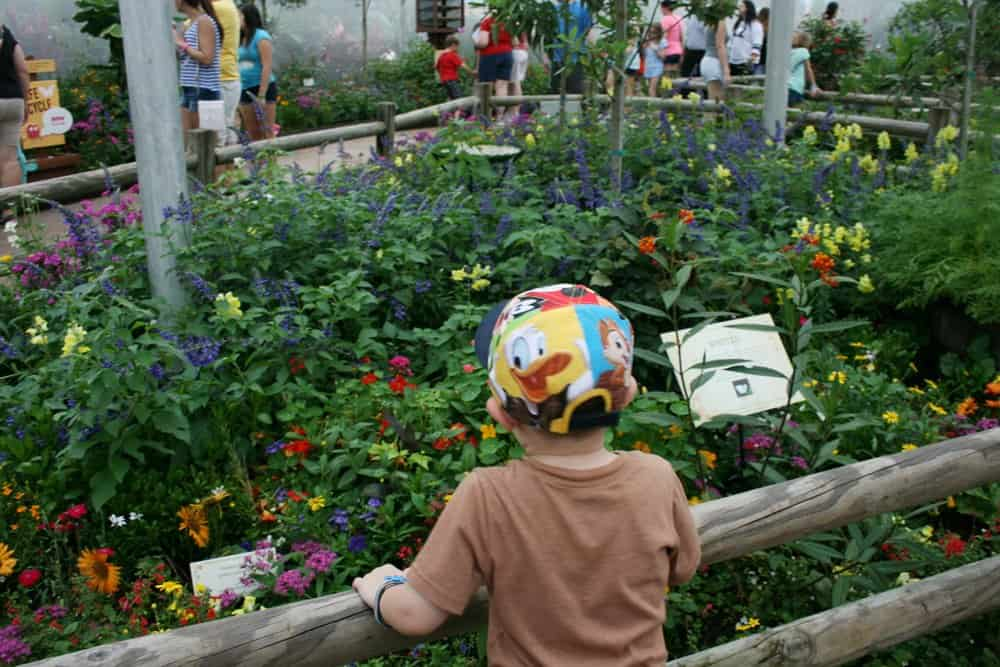 Little boy looking at flowers during Epcot flower and garden