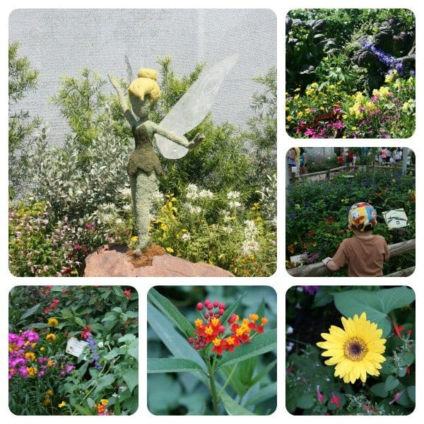Collage of flowers at Epcot flower and garden