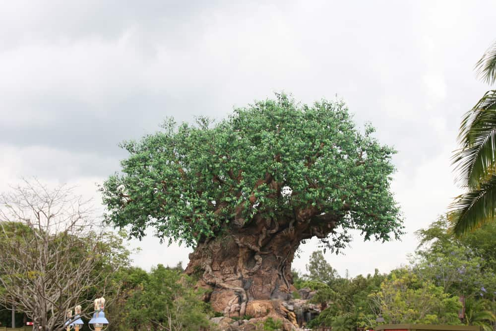 Animal Kingdom Tree of Life - Walt Disney World