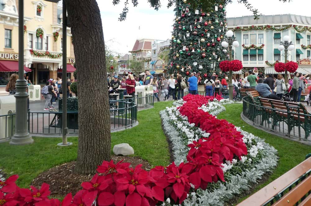 Christmas floral designs at Disneyland
