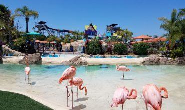 Aquatica San Diego entrance with flamingos