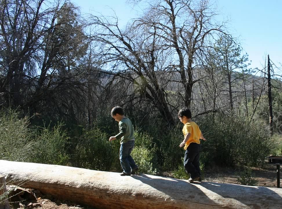 Kids climbing a tree stump in Cuyamaca Mountains