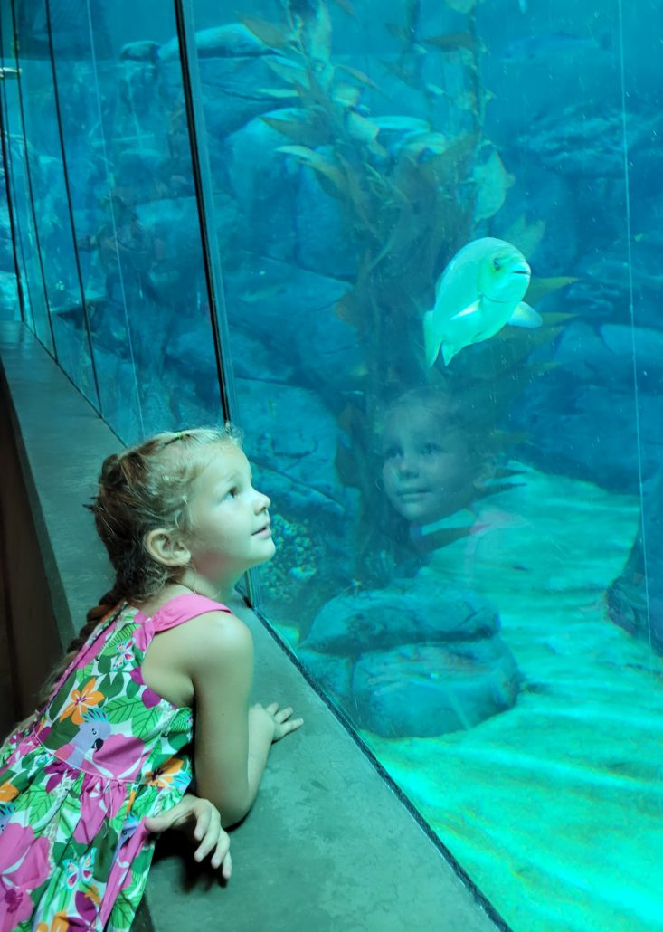 little girl watching fish in a zoo aquarium
